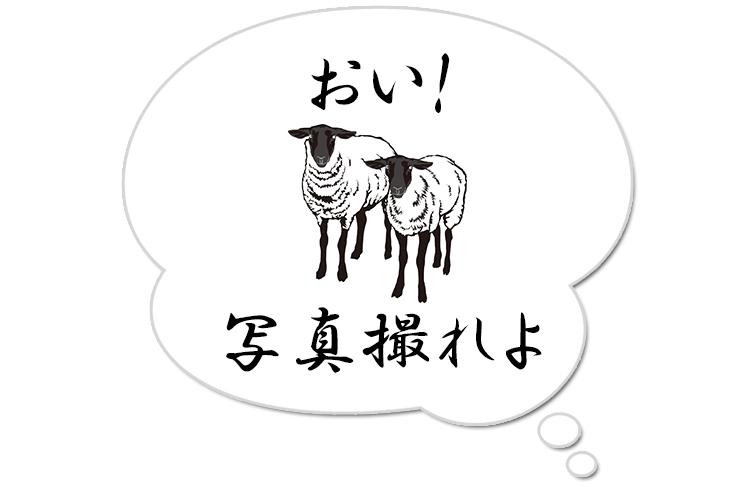 福井しあわせ元気国体2018 芦川和義